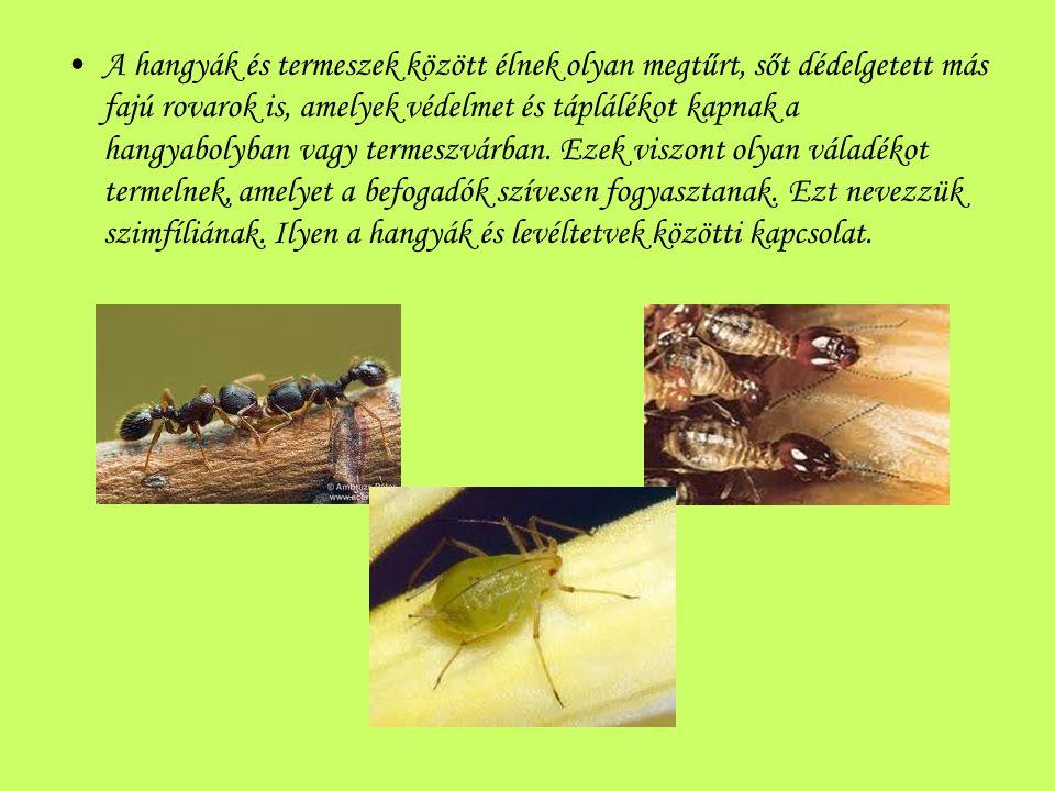 A hangyák és termeszek között élnek olyan megtűrt, sőt dédelgetett más fajú rovarok is, amelyek védelmet és táplálékot kapnak a hangyabolyban vagy termeszvárban.