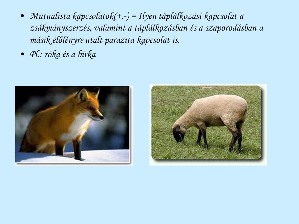 Mutualista kapcsolatok(+,-) = Ilyen táplálkozási kapcsolat a zsákmányszerzés, valamint a táplálkozásban és a szaporodásban a másik élőlényre utalt parazita kapcsolat is.