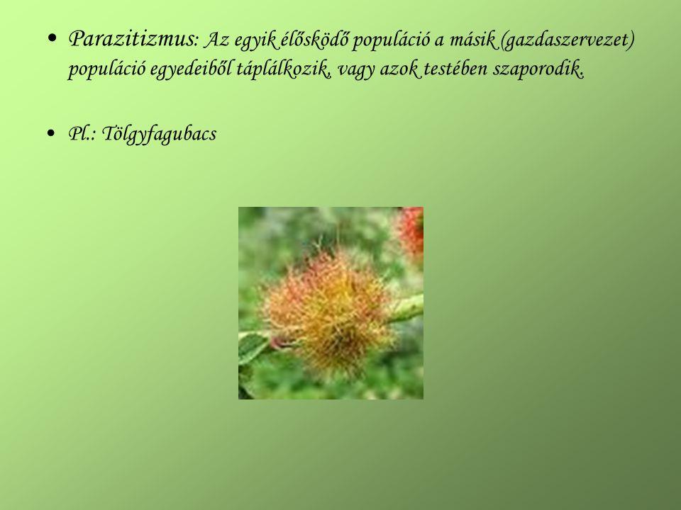 Parazitizmus: Az egyik élősködő populáció a másik (gazdaszervezet) populáció egyedeiből táplálkozik, vagy azok testében szaporodik.