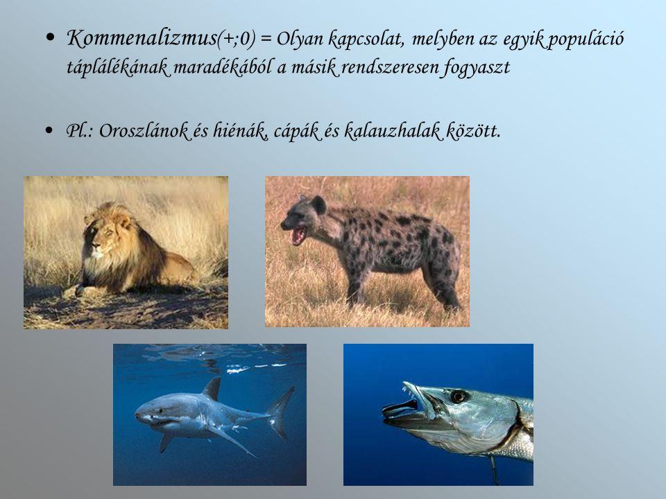 Kommenalizmus(+;0) = Olyan kapcsolat, melyben az egyik populáció táplálékának maradékából a másik rendszeresen fogyaszt