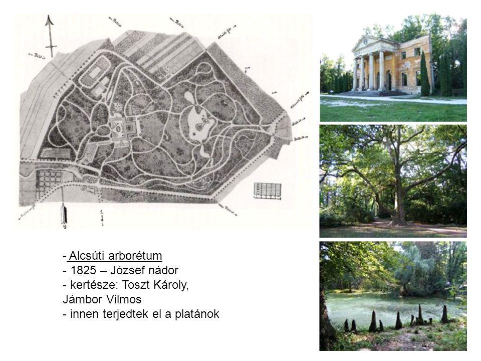 Alcsúti arborétum 1825 – József nádor. kertésze: Toszt Károly, Jámbor Vilmos.