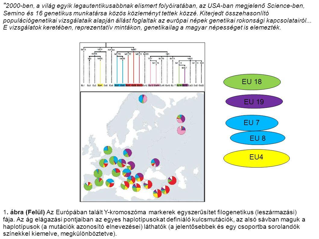 2000-ben, a világ egyik legautentikusabbnak elismert folyóiratában, az USA-ban megjelenő Science-ben, Semino és 16 genetikus munkatársa közös közleményt tettek közzé. Kiterjedt összehasonlító populációgenetikai vizsgálataik alapján állást foglaltak az európai népek genetikai rokonsági kapcsolatairól... E vizsgálatok keretében, reprezentatív mintákon, genetikailag a magyar népességet is elemezték.