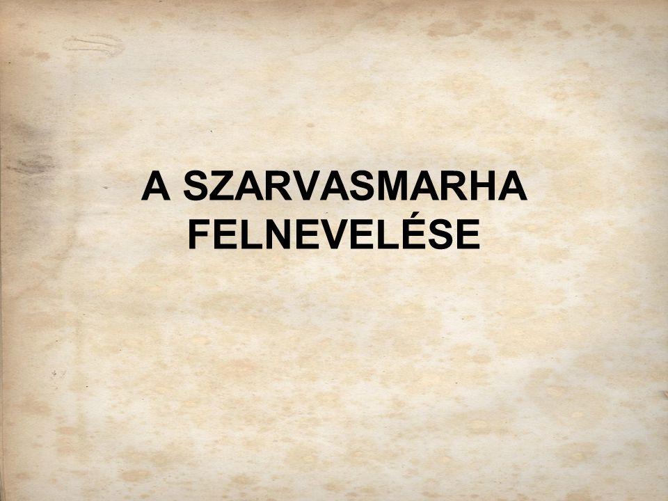 A SZARVASMARHA FELNEVELÉSE
