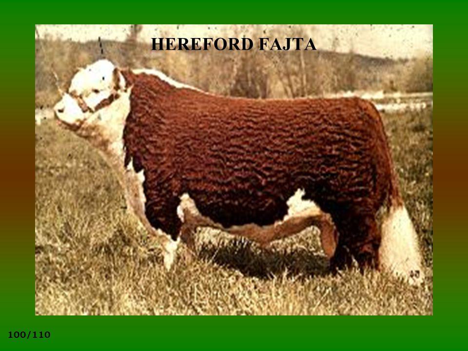 HEREFORD FAJTA