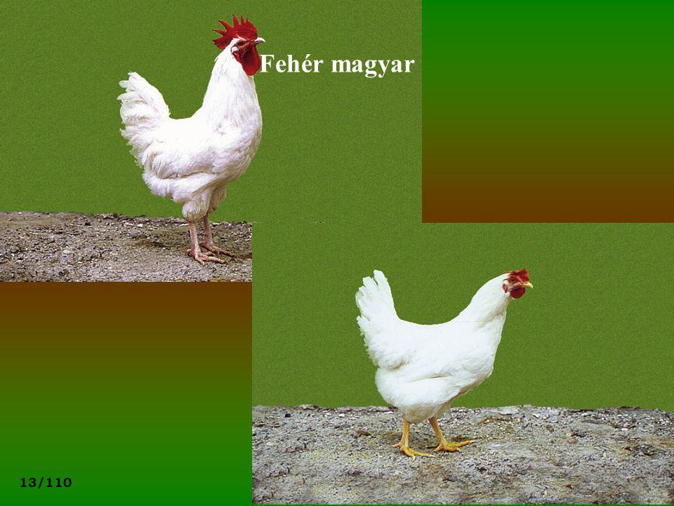 Fehér magyar