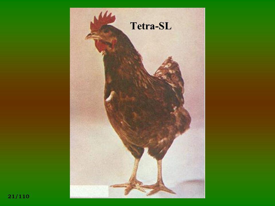 Tetra-SL
