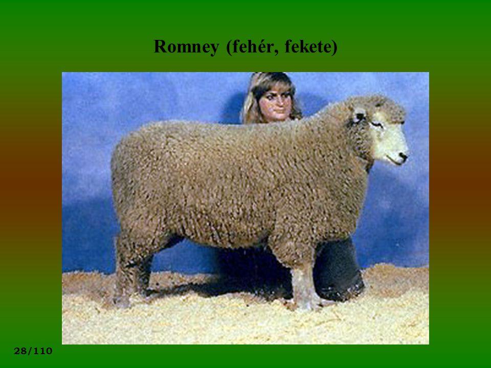 Romney (fehér, fekete)