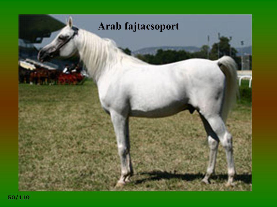 Arab fajtacsoport