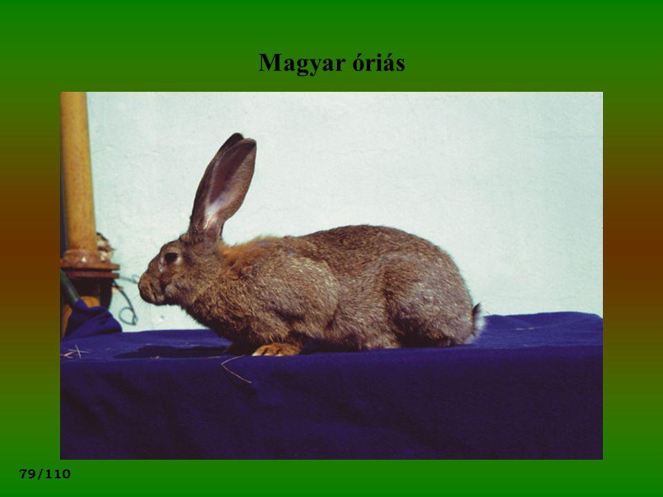 Magyar óriás