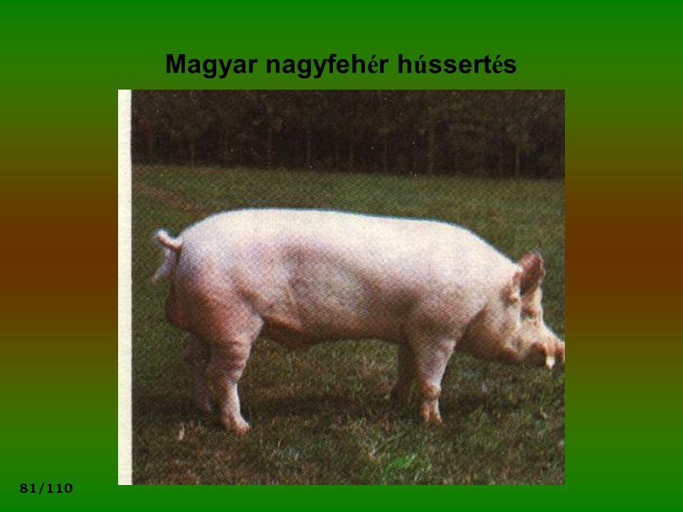 Magyar nagyfehér hússertés