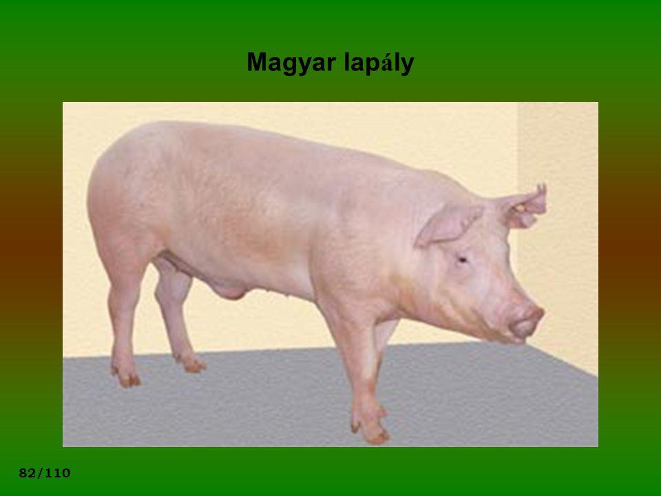 Magyar lapály