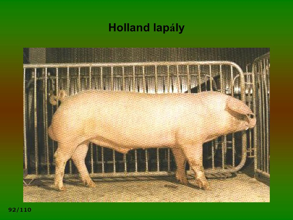 Holland lapály