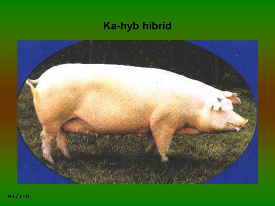 Ka-hyb hibrid