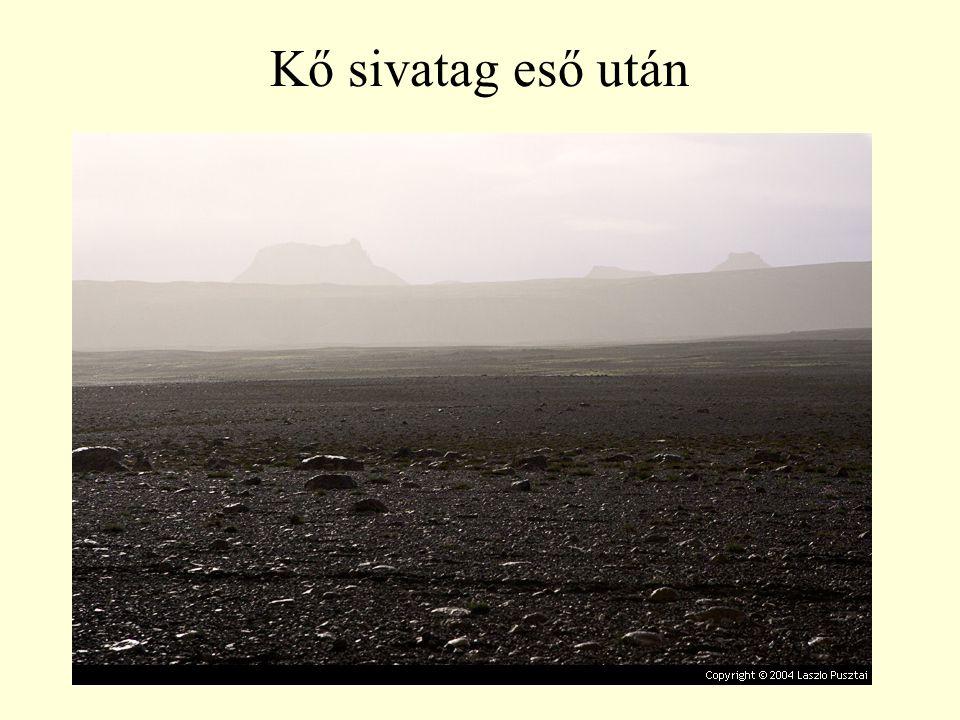 Kő sivatag eső után