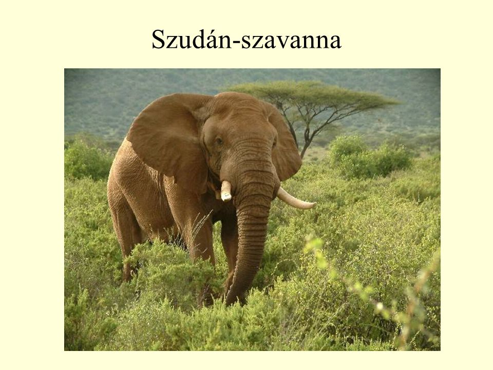 Szudán-szavanna