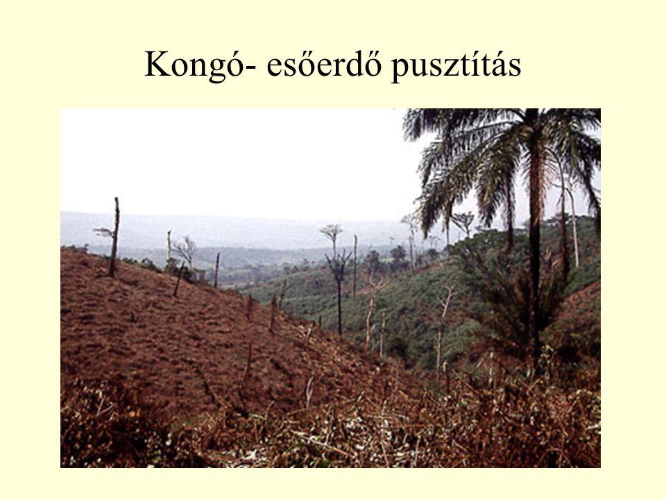 Kongó- esőerdő pusztítás