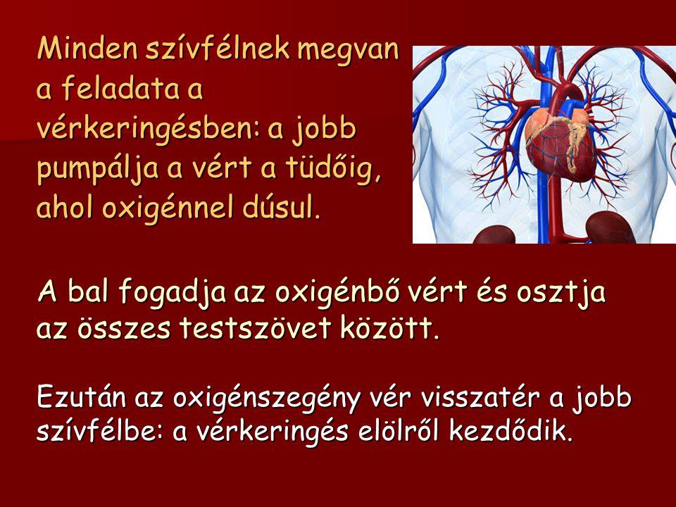 Minden szívfélnek megvan a feladata a vérkeringésben: a jobb