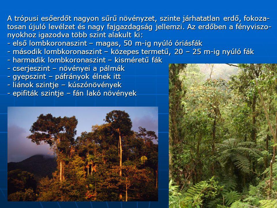 A trópusi esőerdőt nagyon sűrű növényzet, szinte járhatatlan erdő, fokoza-tosan újuló levélzet és nagy fajgazdagság jellemzi. Az erdőben a fényviszo-nyokhoz igazodva több szint alakult ki: