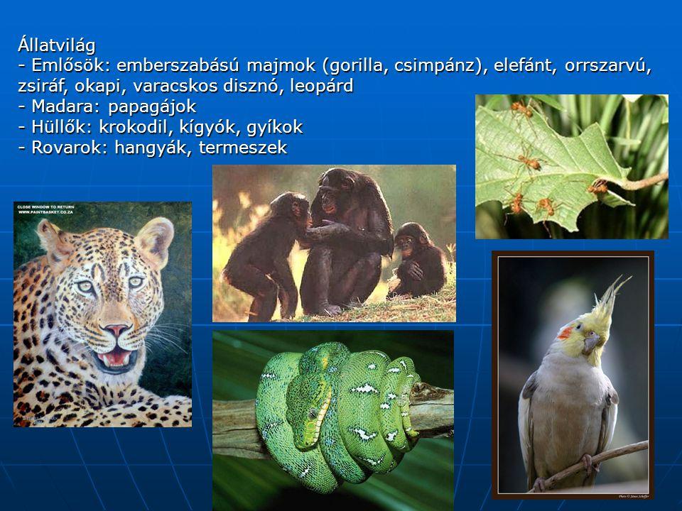 Állatvilág - Emlősök: emberszabású majmok (gorilla, csimpánz), elefánt, orrszarvú, zsiráf, okapi, varacskos disznó, leopárd.