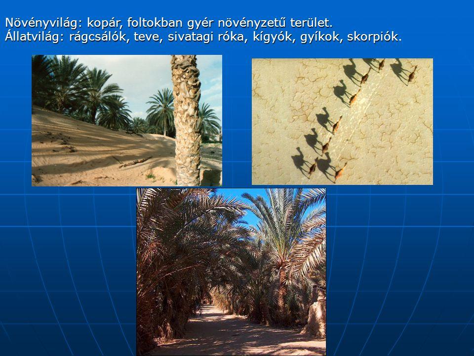 Növényvilág: kopár, foltokban gyér növényzetű terület.