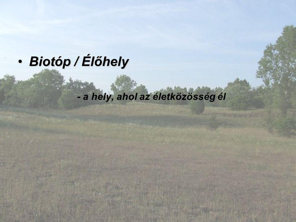 Biotóp / Élőhely - a hely, ahol az életközösség él