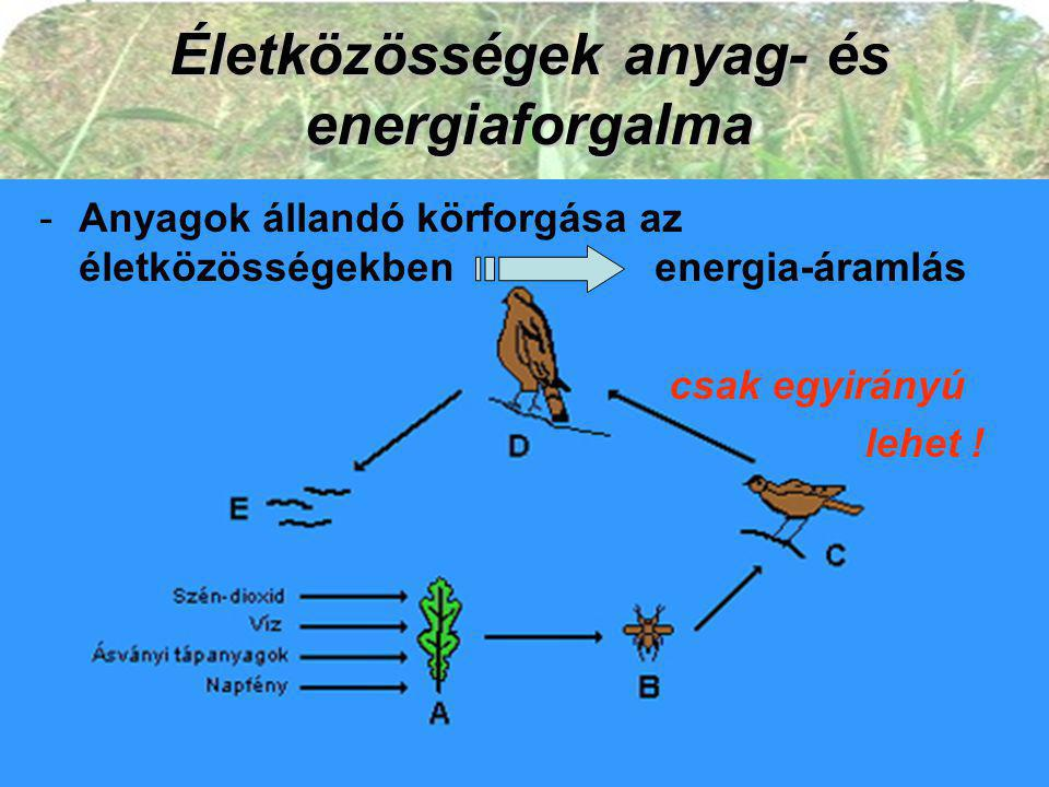 Életközösségek anyag- és energiaforgalma