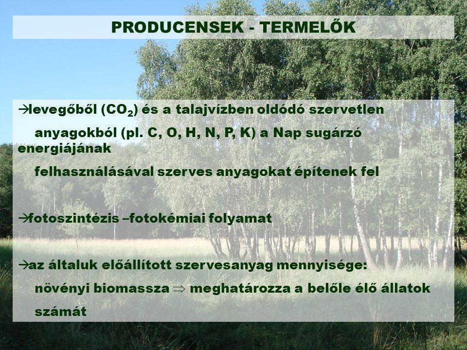 PRODUCENSEK - TERMELŐK