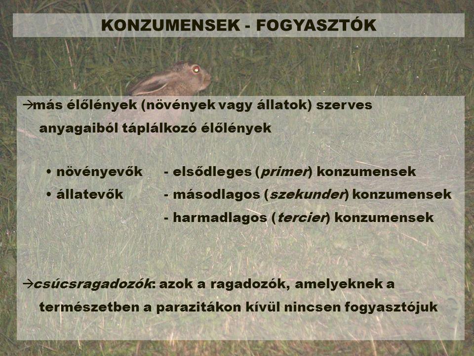KONZUMENSEK - FOGYASZTÓK
