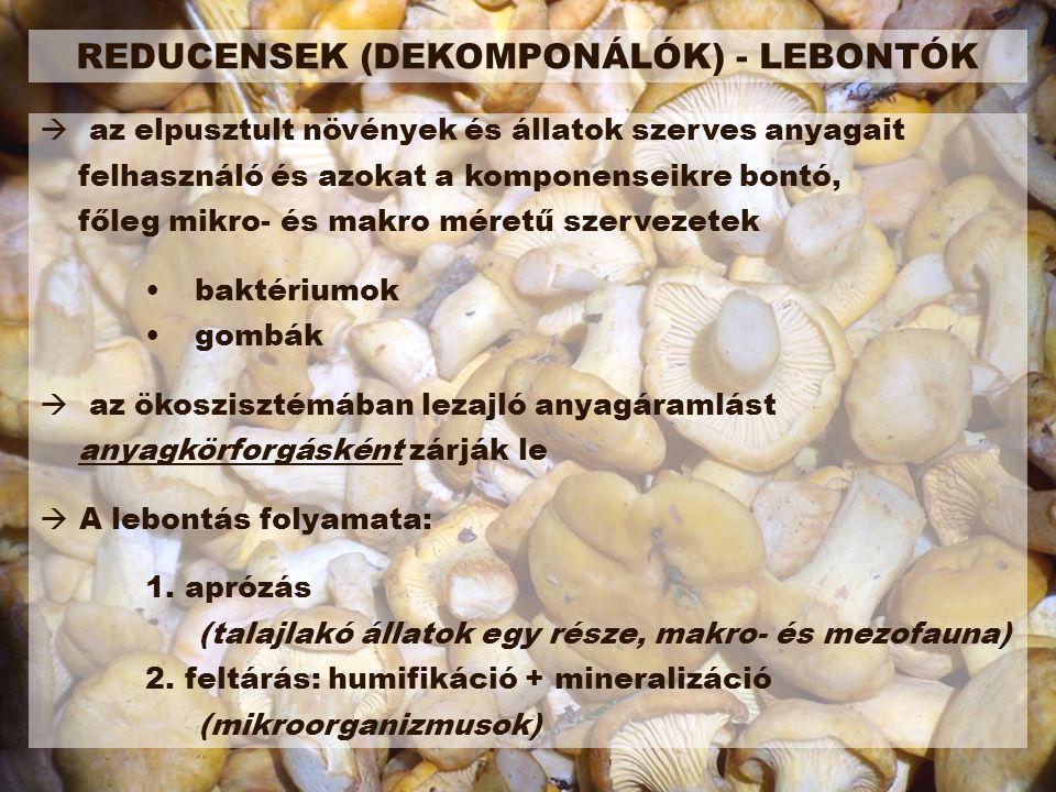 REDUCENSEK (DEKOMPONÁLÓK) - LEBONTÓK