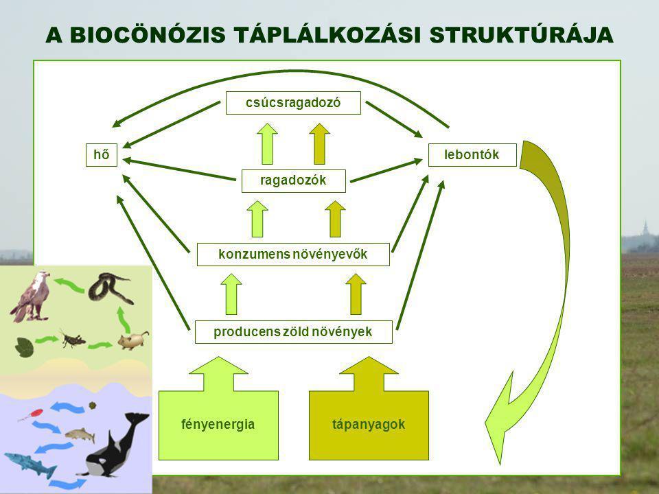 producens zöld növények