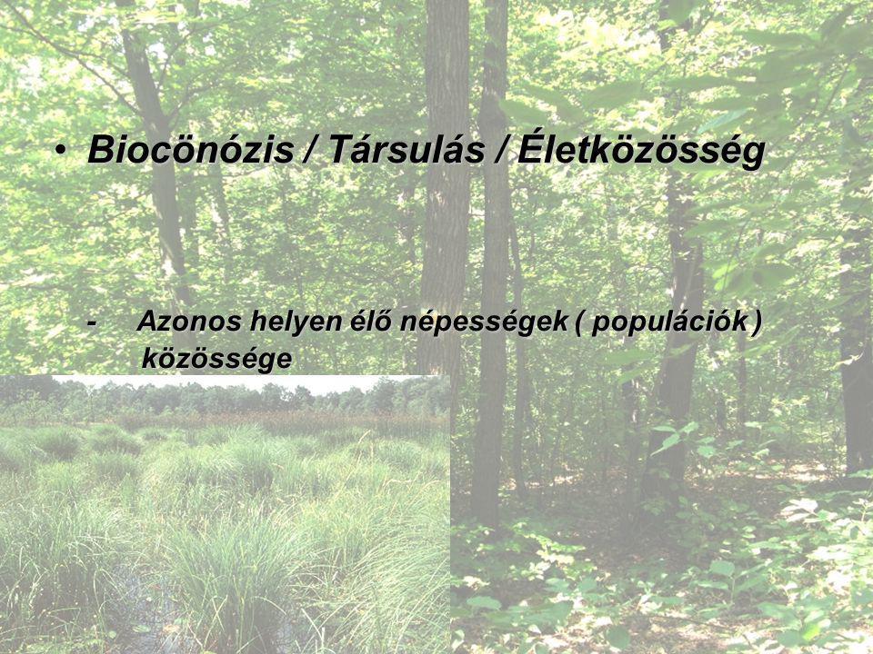 Biocönózis / Társulás / Életközösség