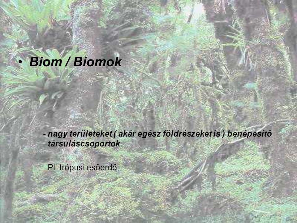 Biom / Biomok - nagy területeket ( akár egész földrészeket is ) benépesítő társuláscsoportok.