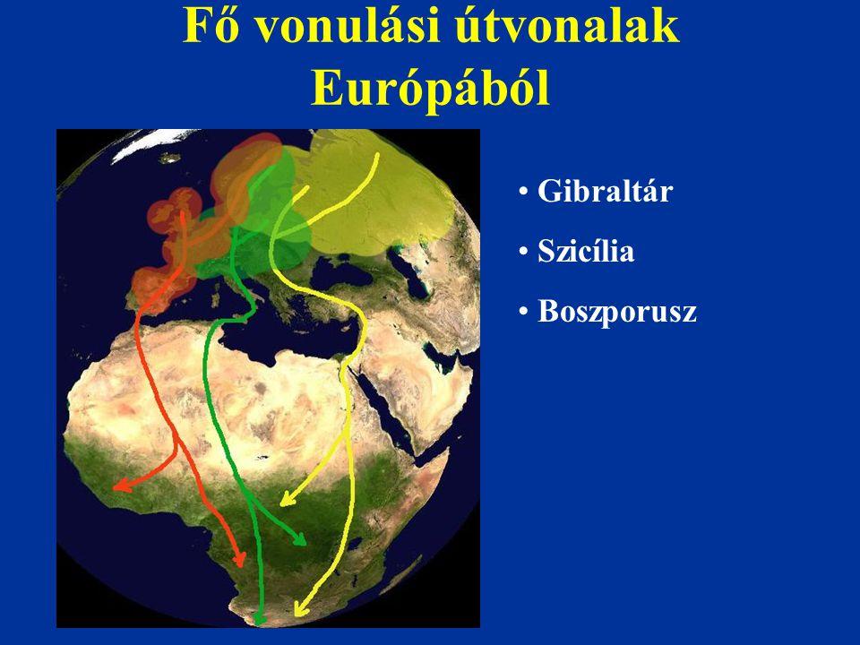 Fő vonulási útvonalak Európából