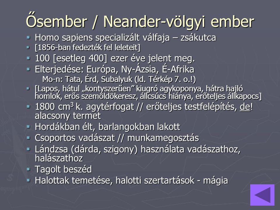 Ősember / Neander-völgyi ember