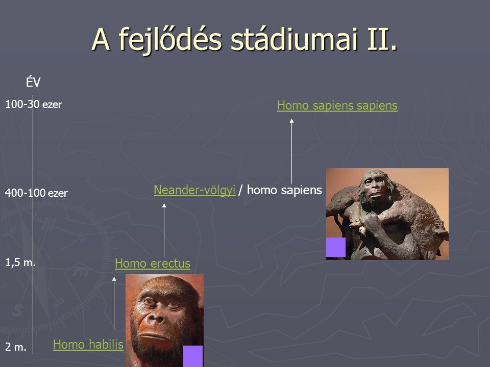 A fejlődés stádiumai II.
