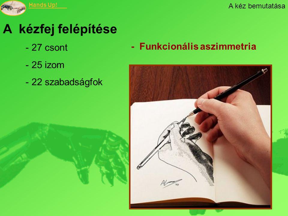 A kézfej felépítése - Funkcionális aszimmetria 27 csont 25 izom