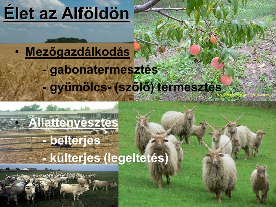 Élet az Alföldön Mezőgazdálkodás - gabonatermesztés
