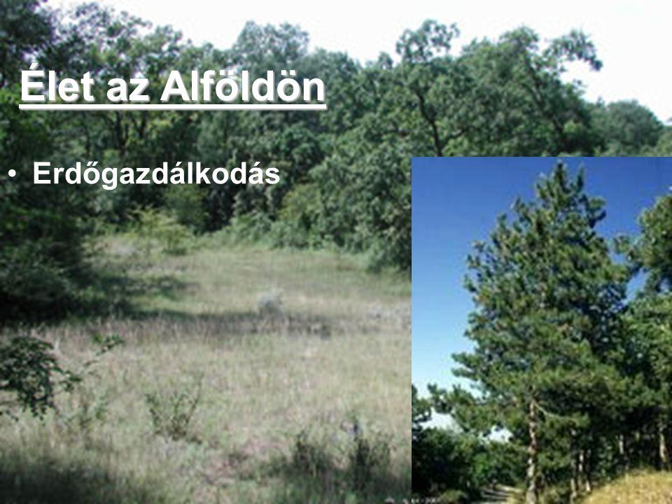 Élet az Alföldön Erdőgazdálkodás