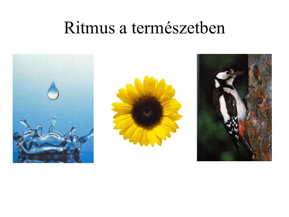 Ritmus a természetben