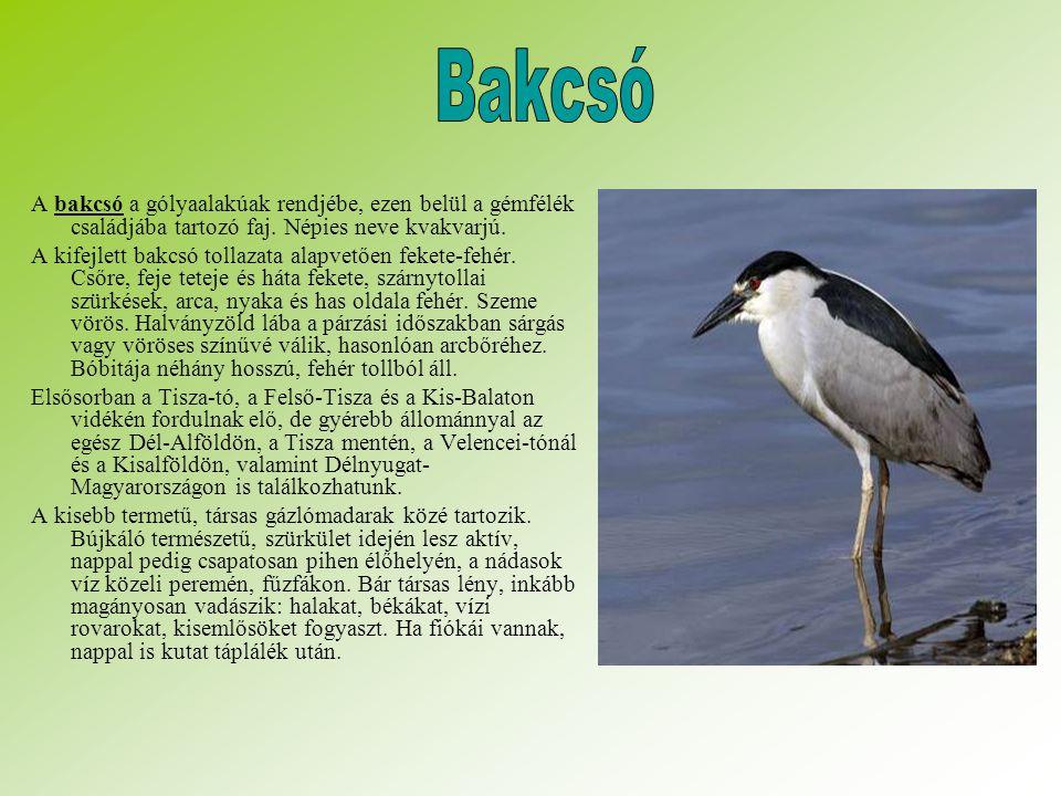 Bakcsó A bakcsó a gólyaalakúak rendjébe, ezen belül a gémfélék családjába tartozó faj. Népies neve kvakvarjú.
