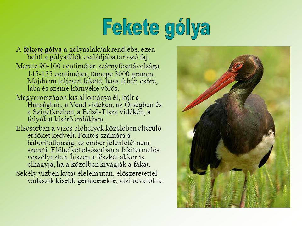 Fekete gólya A fekete gólya a gólyaalakúak rendjébe, ezen belül a gólyafélék családjába tartozó faj.