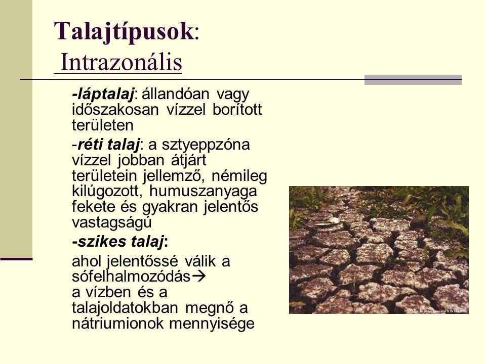 Talajtípusok: Intrazonális
