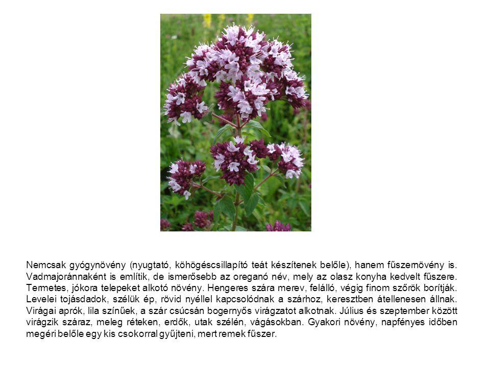 Nemcsak gyógynövény (nyugtató, köhögéscsillapító teát készítenek belőle), hanem fűszernövény is.