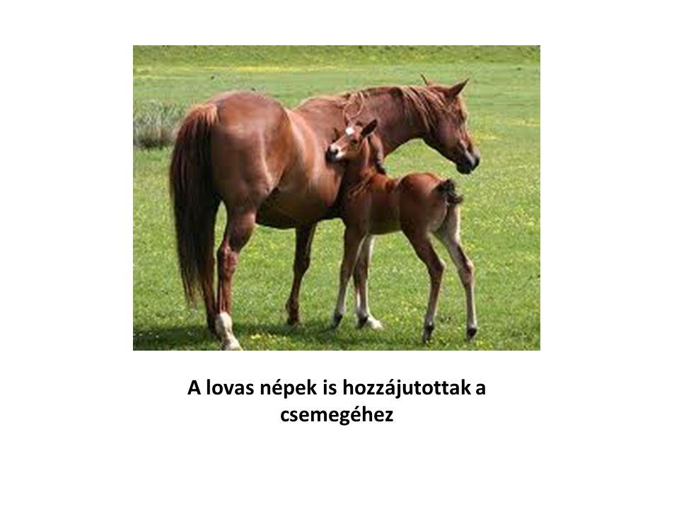 A lovas népek is hozzájutottak a csemegéhez