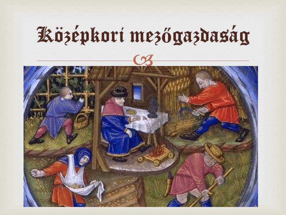 Középkori mezőgazdaság