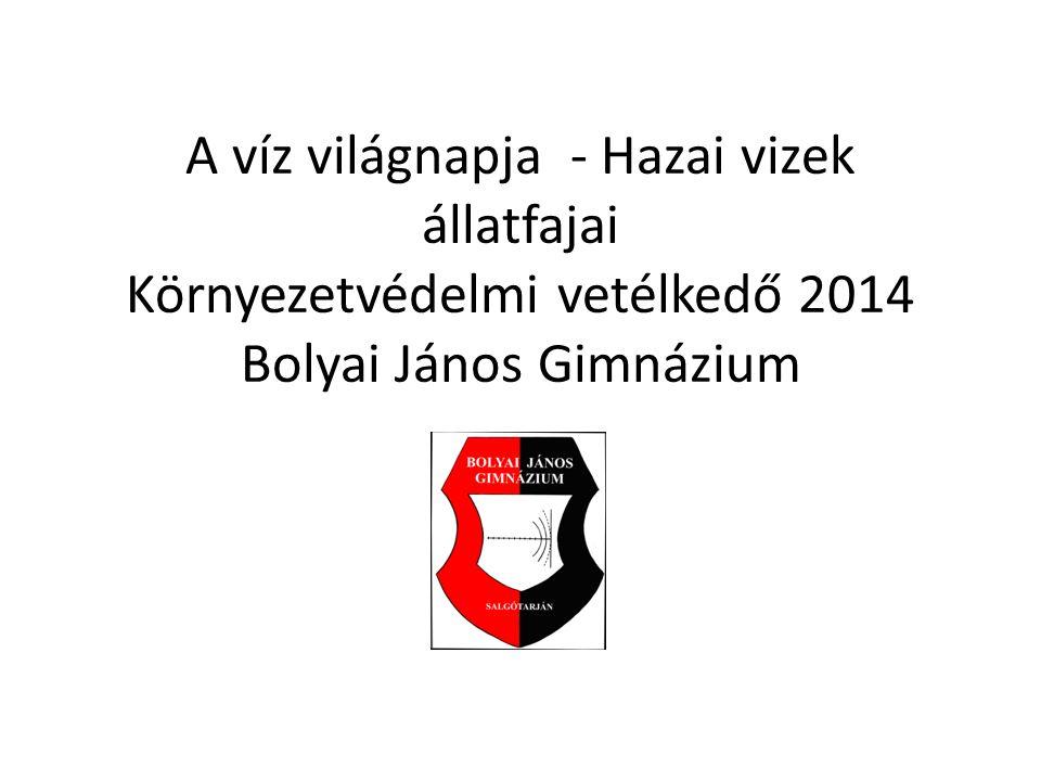 A víz világnapja - Hazai vizek állatfajai Környezetvédelmi vetélkedő 2014 Bolyai János Gimnázium