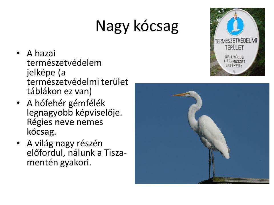 Nagy kócsag A hazai természetvédelem jelképe (a természetvédelmi terület táblákon ez van)