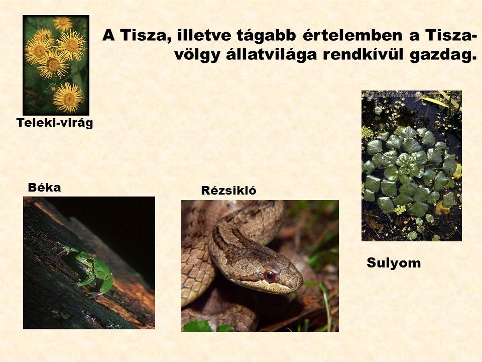 A Tisza, illetve tágabb értelemben a Tisza-völgy állatvilága rendkívül gazdag.