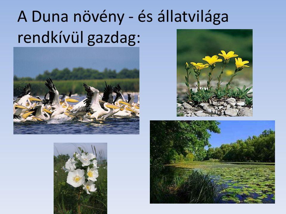 A Duna növény - és állatvilága rendkívül gazdag: