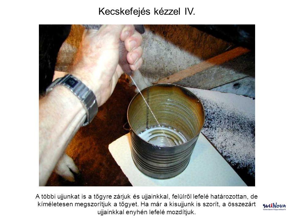 Kecskefejés kézzel IV.